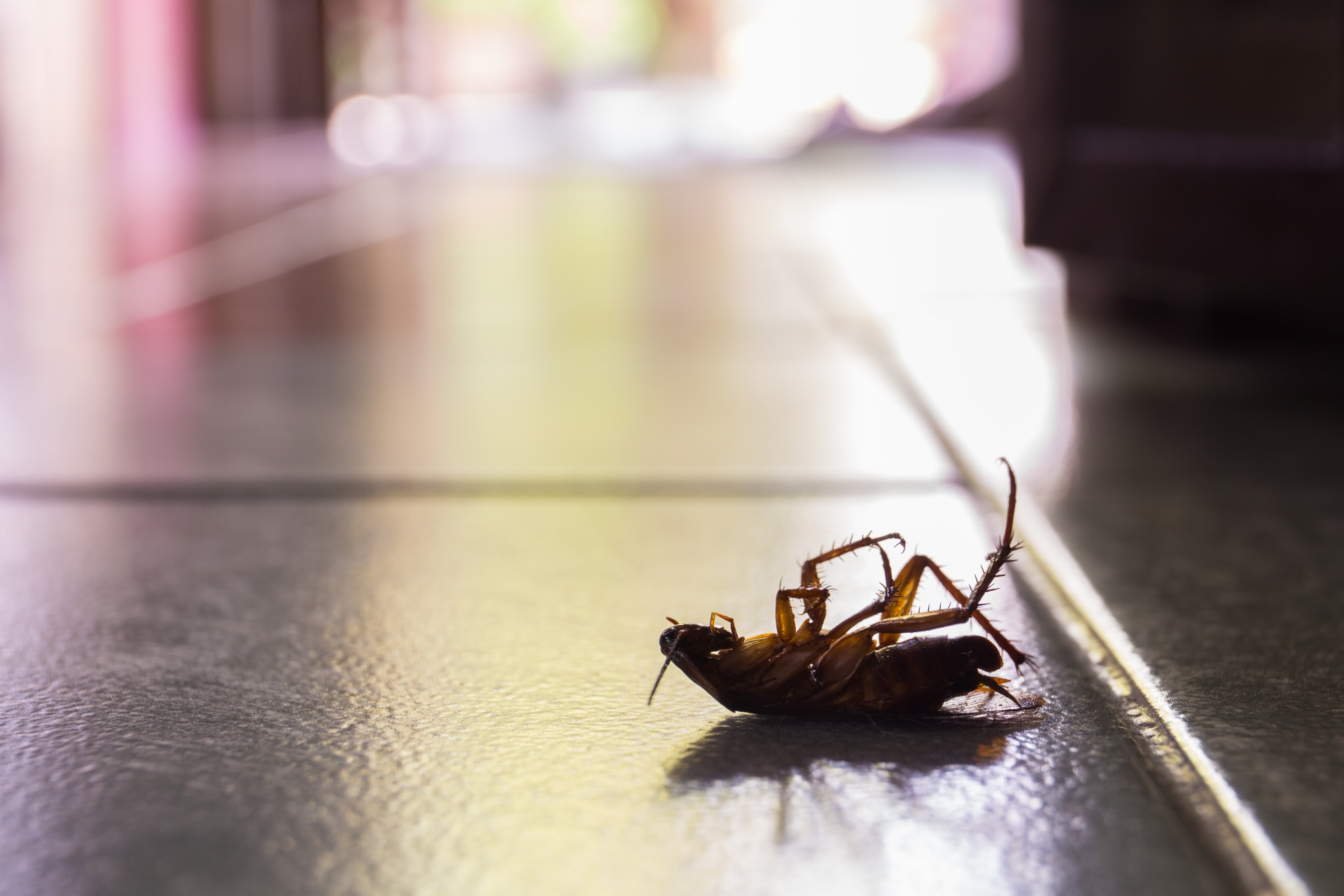 Cockroach Control, Pest Control in West Kensington, W14. Call Now 020 8166 9746