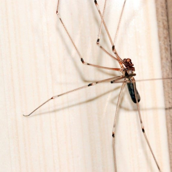 Spiders, Pest Control in West Kensington, W14. Call Now! 020 8166 9746